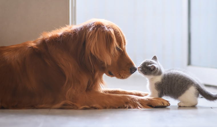 Participants in the study said their pets help them socialise and make friends.
