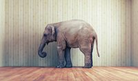Primary care prevention of the cardiovascular health crisis for people with severe mental illnesses: The elephant in the room